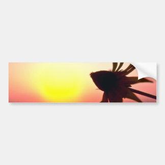 Black Coneflower before the setting sun, Quebec, C Bumper Stickers