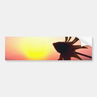 Black Coneflower before the setting sun Quebec C Bumper Sticker