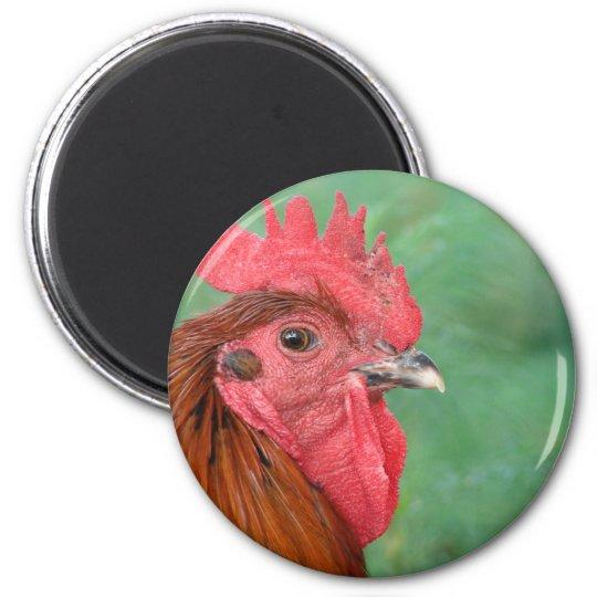 Black Copper Maran Rooster 6 Cm Round Magnet
