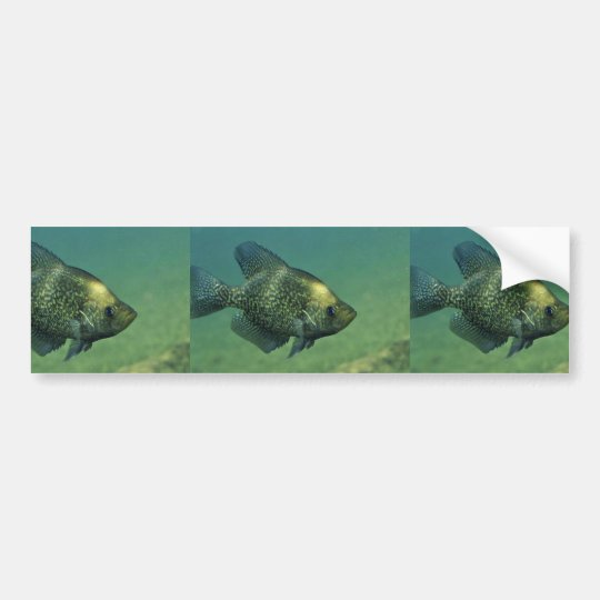 Black crappie bumper sticker