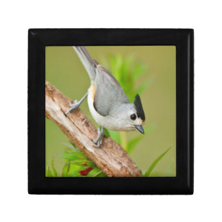 Black-Crested Titmouse Gift Box