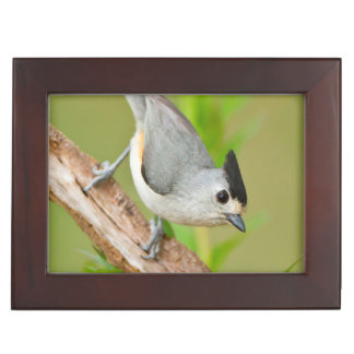 Black-Crested Titmouse Memory Boxes