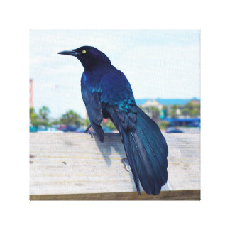 Black Crow on a Pier Gallery Wrapped Canvas