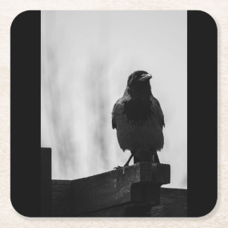Black crow standing photo on square paper coaster