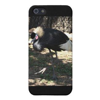 Black Crowned Crane Case iPhone 5 Case