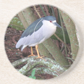 Black Crowned Night Heron Coaster