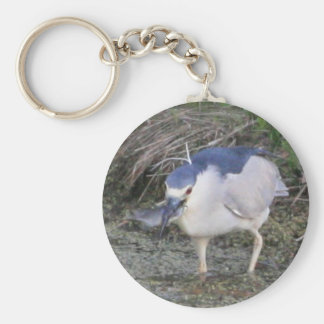 Black-crowned Night-heron Eating Basic Round Button Key Ring