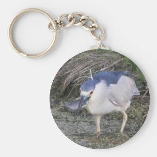 Black-crowned Night-heron Eating Keychains