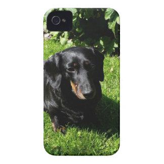 Black Dachshund iPhone 4 Cover