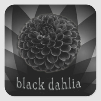 Black dahlia on an abstract background sticker