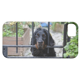 Black Dog Behind the Fence,  Bretagne, France Barely There iPhone 5 Case