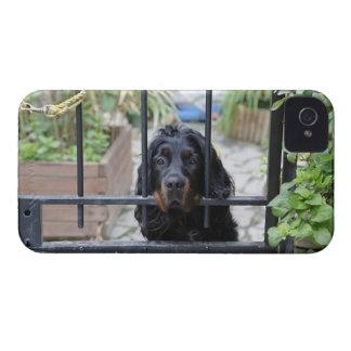 Black Dog Behind the Fence,  Bretagne, France iPhone 4 Case