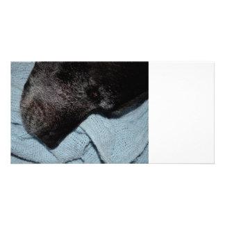 black dog head on blue blanket canine animal pet photo card