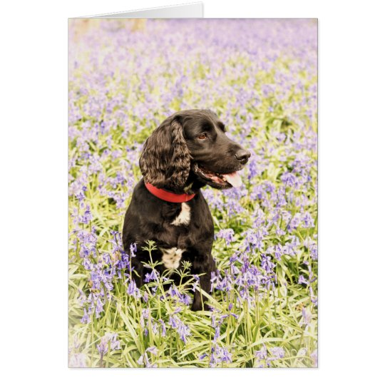 Black dog in bluebells card
