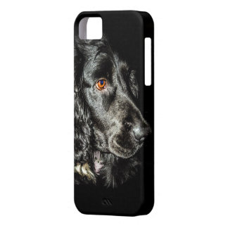 Black Dog iPhone 5 Covers