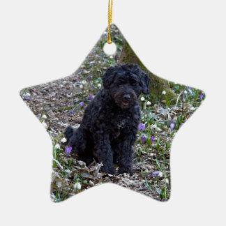 Black English Springer Spaniel Ceramic Star Decoration