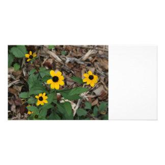 black eye susan flowers pretty field yellow flower photo card
