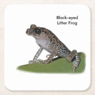 Black-eyed Litter Frog Coasters Square Paper Coaster