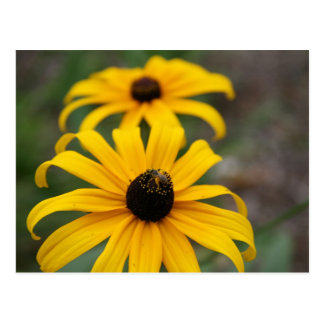 Black-Eyed Susan and Bee Postcard