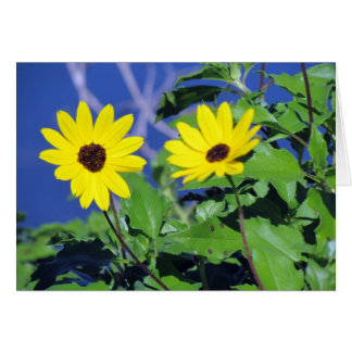 Black Eyed Susan Birthday Card