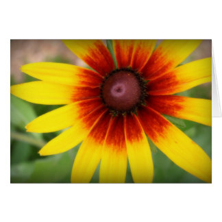 Black Eyed Susan - Blank Inside Greeting Card