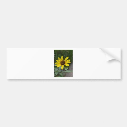Black Eyed Susan by LellO Bumper Stickers