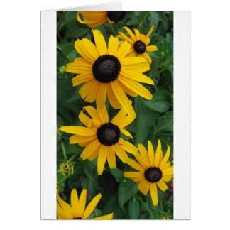 Black Eyed Susan Cards