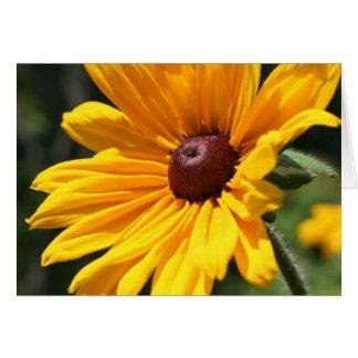 Black Eyed Susan Flower Photography Card