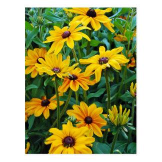 Black eyed susan flower print postcard