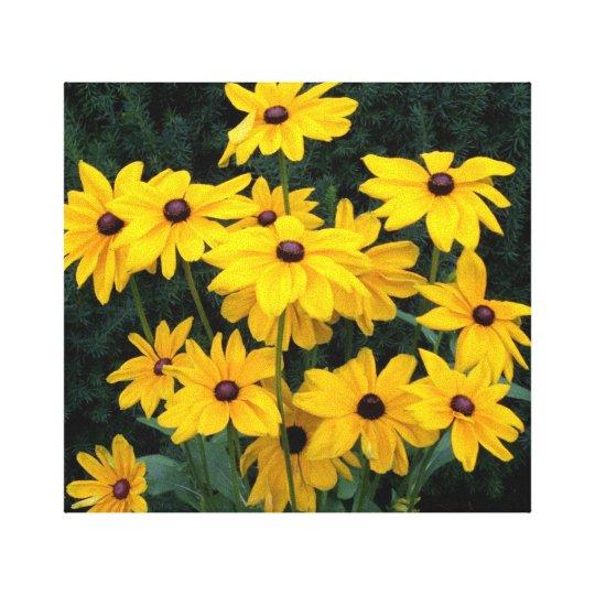 Black Eyed Susan Flowers Canvas Print