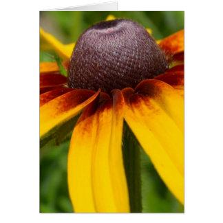 Black Eyed Susan Flowers Card