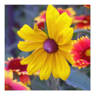 """Black eyed susan flowers plus a fly colorful photo 5.25"""" square invitation card"""
