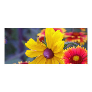 """Black eyed susan flowers plus a fly colorful photo 4"""" x 9.25"""" invitation card"""