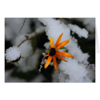 black eyed susan in snow greeting card