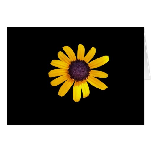 Black Eyed Susan Products Greeting Cards