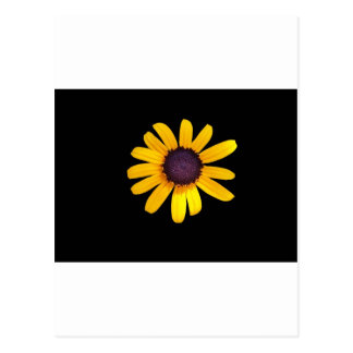 Black Eyed Susan Products Post Card
