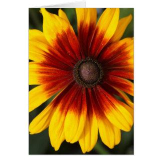 Black-eyed-Susan (Rudbeckia hirta) Greeting Card
