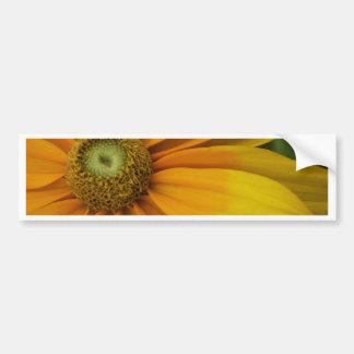 """Black-eyed Susan's, Rudbeckia hirta """"Prairie Sun"""" Bumper Sticker"""