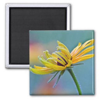 Black-eyed Susan Square Magnet