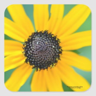 Black-Eyed Susan Square Sticker