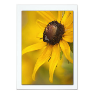 Black-Eyed Susan with a Teardrop Template 5x7 Paper Invitation Card