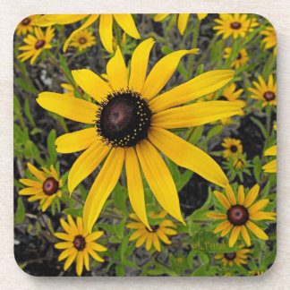 Black Eyed Susans Beverage Coasters
