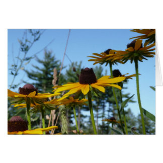 Black eyed Susans Card