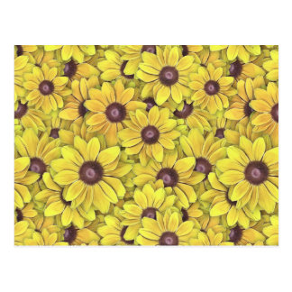Black Eyed Susans Everywhere Postcard