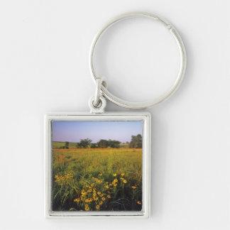 Black eyed Susans in tallgrass prairie at Neil Key Ring
