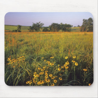 Black eyed Susans in tallgrass prairie at Neil Mouse Mat