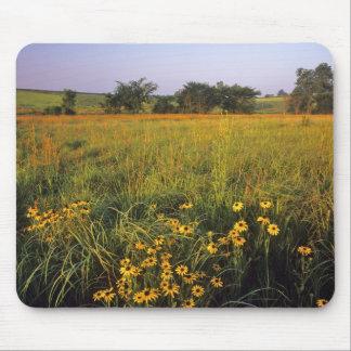 Black eyed Susans in tallgrass prairie at Neil Mouse Pad