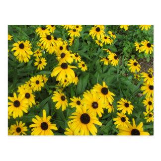 Black Eyed Susans Yellow Green Post Cards