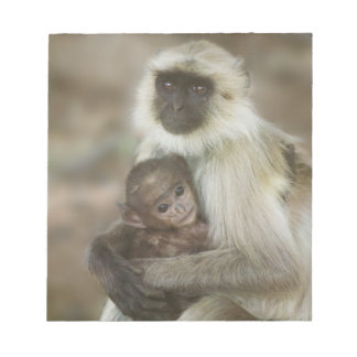 Black-face Langurs, mother with baby, in Notepads