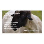 Black Faced Sheep Pack Of Standard Business Cards